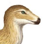 Profilepictoraptor by Osmatar
