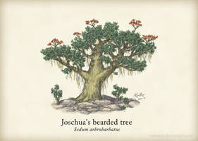 Joschua's Bearded Tree by Osmatar