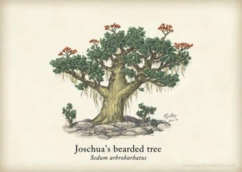 Joschua's Bearded Tree by Osmatar