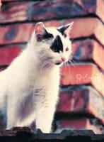 Curiosity killed the cat by NovemberWind94