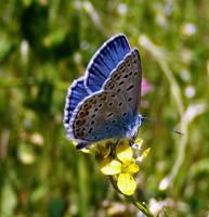 kelebekkiiimmm by lisans