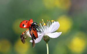 laydybug by lisans