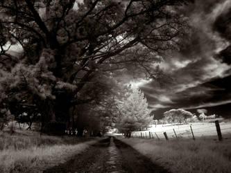 W_Meddow by RichardjJones