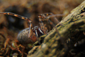 Spider_Robo by RichardjJones