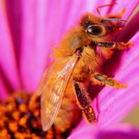 Bee2 by RichardjJones