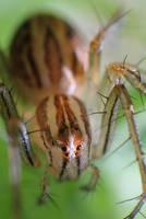 Macro spider 5 by RichardjJones