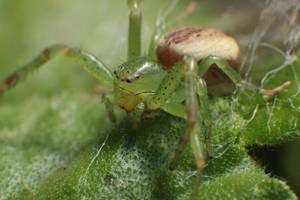 Flower Spider by RichardjJones