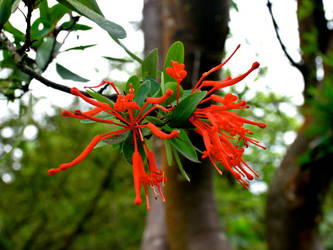 Flame Tree by PicsiDust