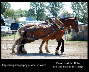- Heavy Horse Pull - :Stock: by SRS-Photography