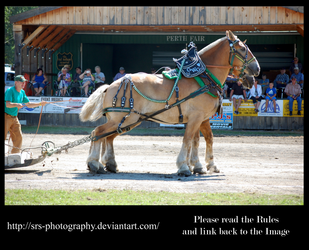 - Heavy Horse Pull 2 - :Stock: by SRS-Photography