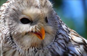 Ural owl. by Evey-Eyes