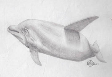 Bottlenose Dolphin by Lukis24