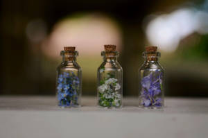 Bottled Enchantment by Theanimalparade