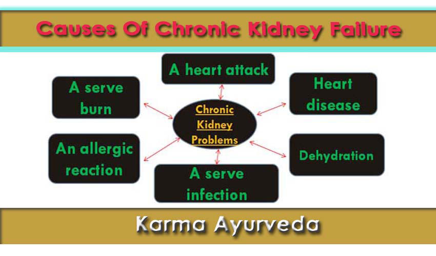 Kidney disease Treatment in Ayurvedic by karmaayurveda12