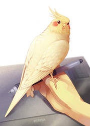 bird on wacom by Era-Artwork