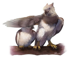 harpy eagles by Era-Artwork