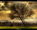 Romantic Tree by Bojkovski