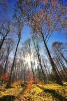 Magical Forest by Bojkovski