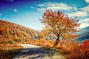 Autumn Road by Bojkovski