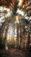 Forest of giants by Bojkovski