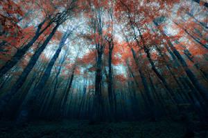 Dark forest by Bojkovski