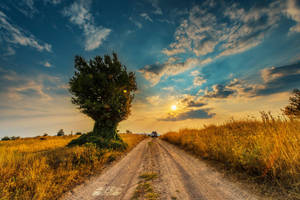 Summer's almost gone 3 by Bojkovski