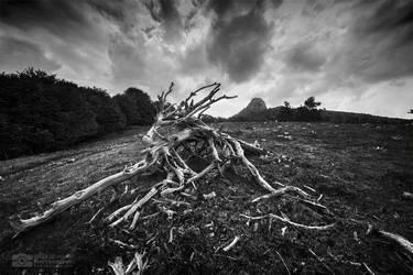 Broken dreams by Bojkovski