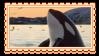 orca by glittersludge