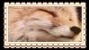 fox by glittersludge