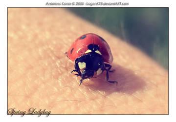 Spring Ladybug by LoganX78