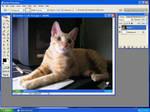 My cat by s2ka