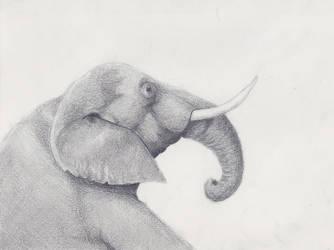 Elephant by dgdesigner