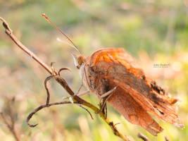 Autumn's Magic by John-Peter
