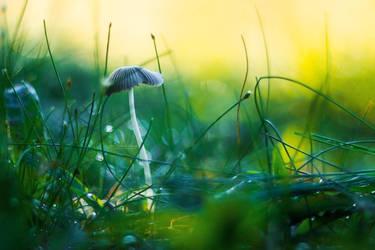 Enchanted by John-Peter