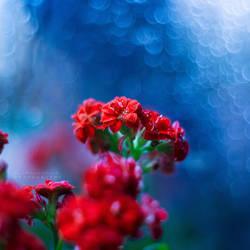 Rainy Heart by John-Peter