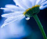 Tear of Dreams by John-Peter