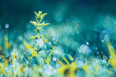 Crystal Fairies by John-Peter