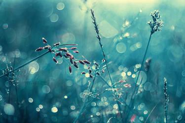 Solitude by John-Peter