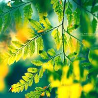 Memories in the Leaves by John-Peter