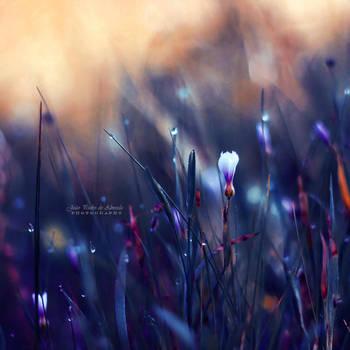 Lonely in Beauty by John-Peter
