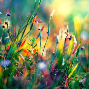 Little Worlds by John-Peter