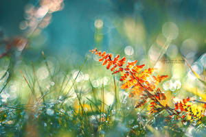 Autumn Memories by John-Peter