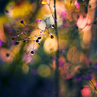 The Rainbow Forest II by John-Peter