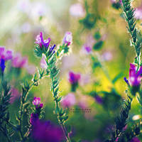 Spring Charm by John-Peter