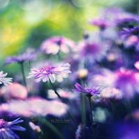 Soft Dreams by John-Peter
