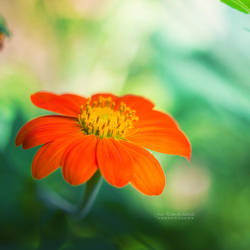 Dear Spring by John-Peter