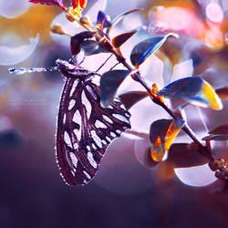 Silver Wings by John-Peter