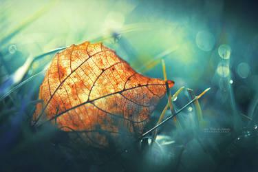 Autumn Gift by John-Peter