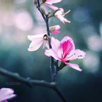 Signs of Spring by John-Peter