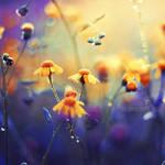 Summer Dream by John-Peter